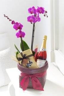 Luxury Orchid Gift Basket
