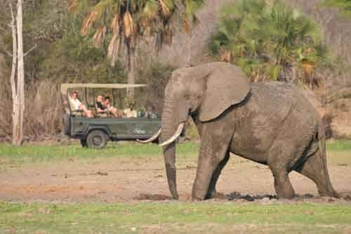 Safari Honeymonn