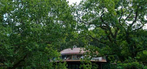 Luxury Tree Houses At The Chewton Glen