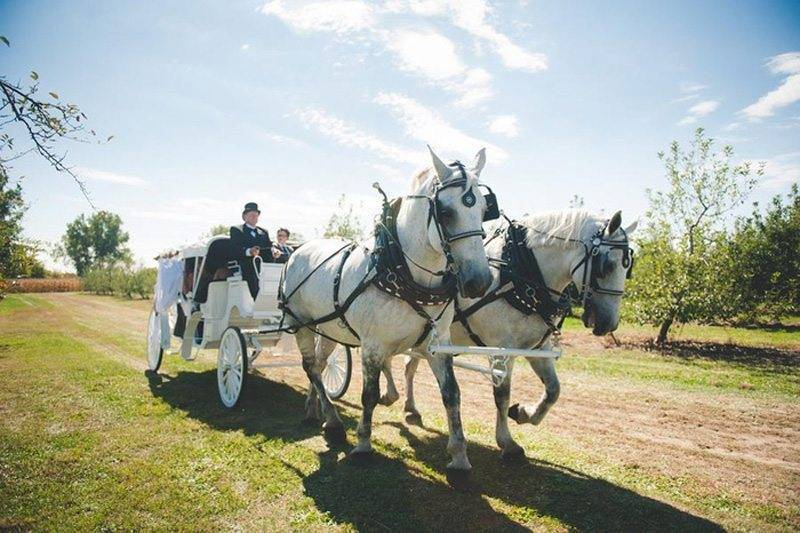 Horse and Cart with Bride and Groom