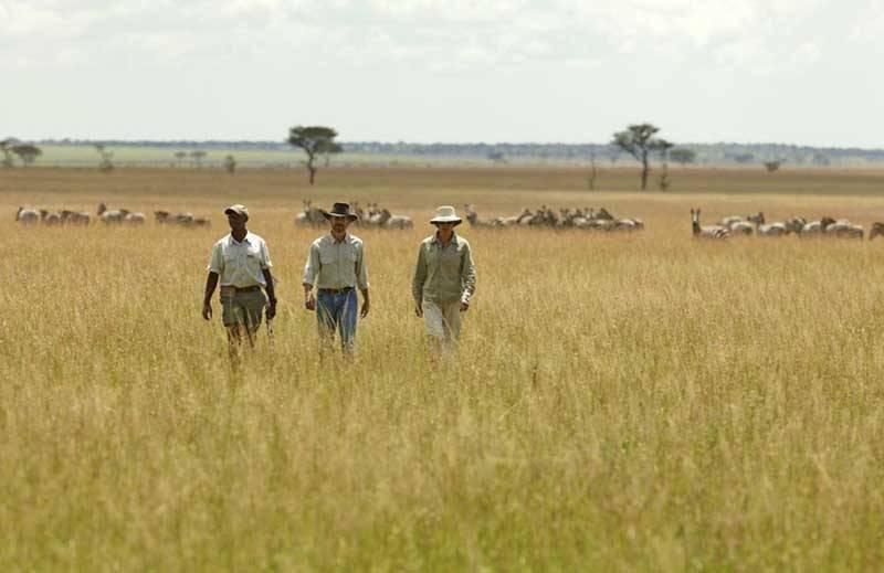 Safari Honeymoon Africa
