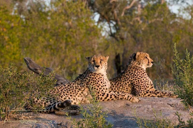 Luxury Honeymoon Africa