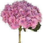 hydrangea-wedding-bouquet-pictures
