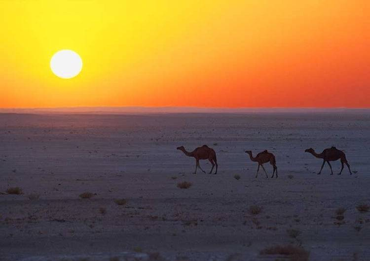 camels-in-the-desert-089-750x530