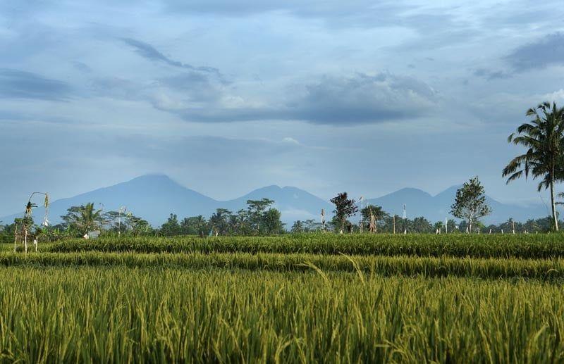 alila-ubud-journey-gl