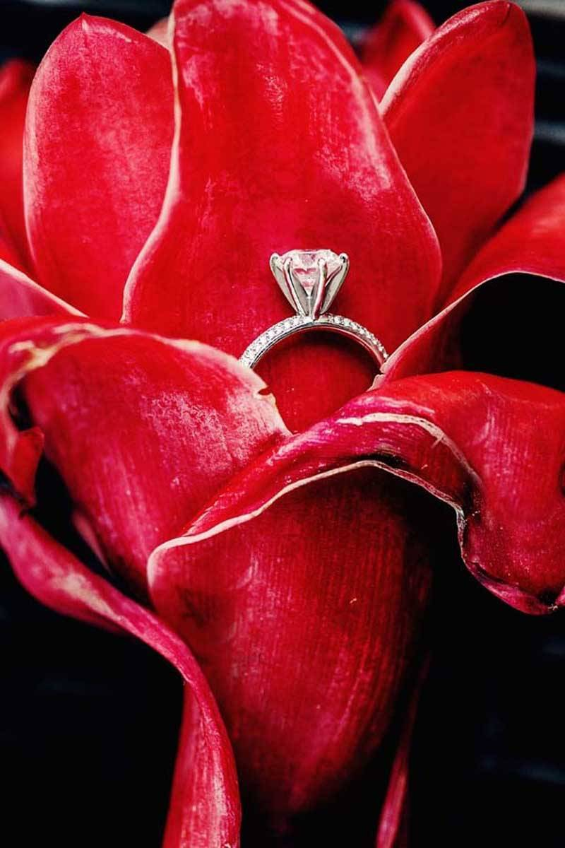 Indian Wedding Rings in a Rose