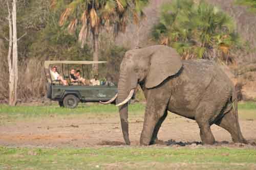 The Safari Calendar Of Southern Tanzania