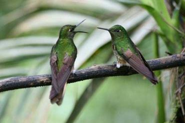 Destination Wedding: Ecuador