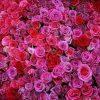 Summer Wedding Flower Trends