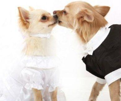 How to involve your dog on your wedding