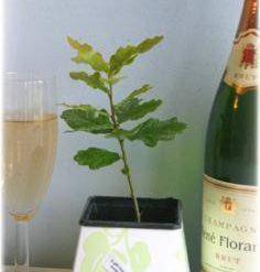 The Eco Wedding and Green Wedding Ceremony