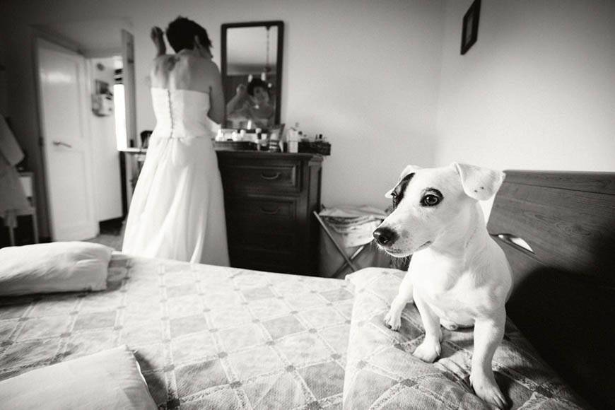 bride dog italy wedding best photographer - Luxury Wedding Gallery