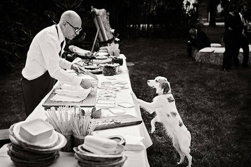 italy wedding caterers dogs humour - Luxury Wedding Gallery