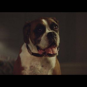 John Lewis Christmas Advert 2016 – #BusterTheBoxer