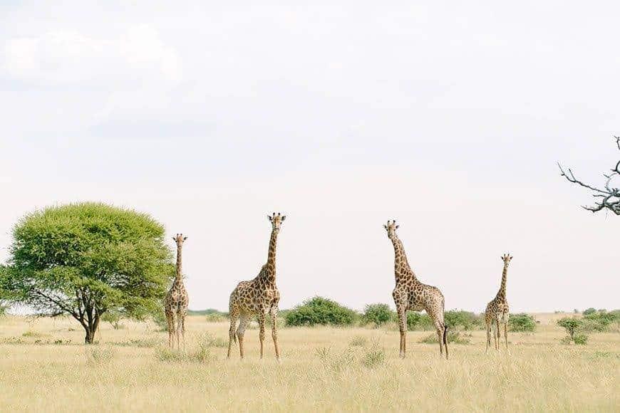 Absolute Perfection Luxury Safari Wedding South Africa Monate Lodge - Luxury Wedding Gallery