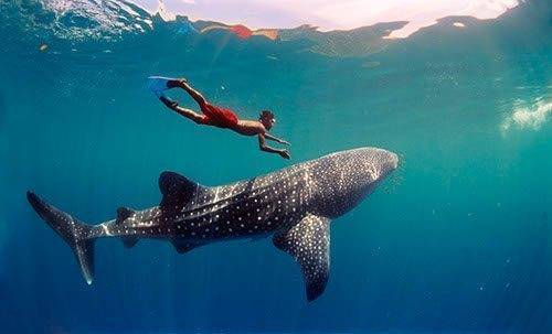 Sunhorse-Weddings-Whale-Shark-