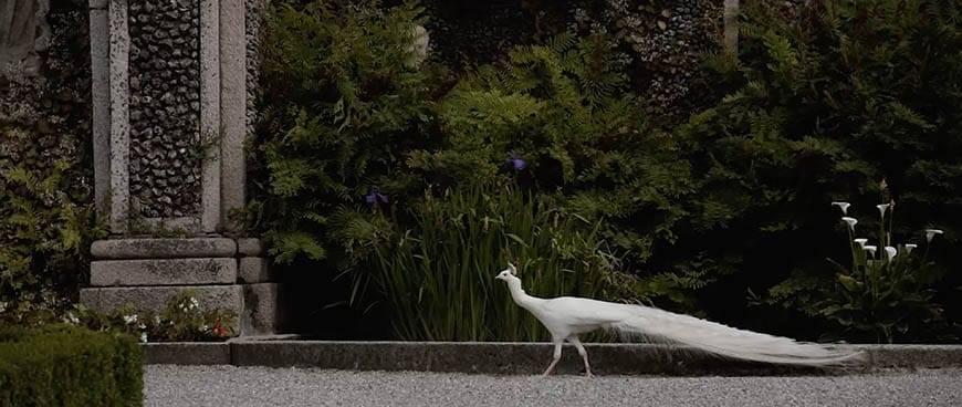 White bird - Luxury Wedding Gallery