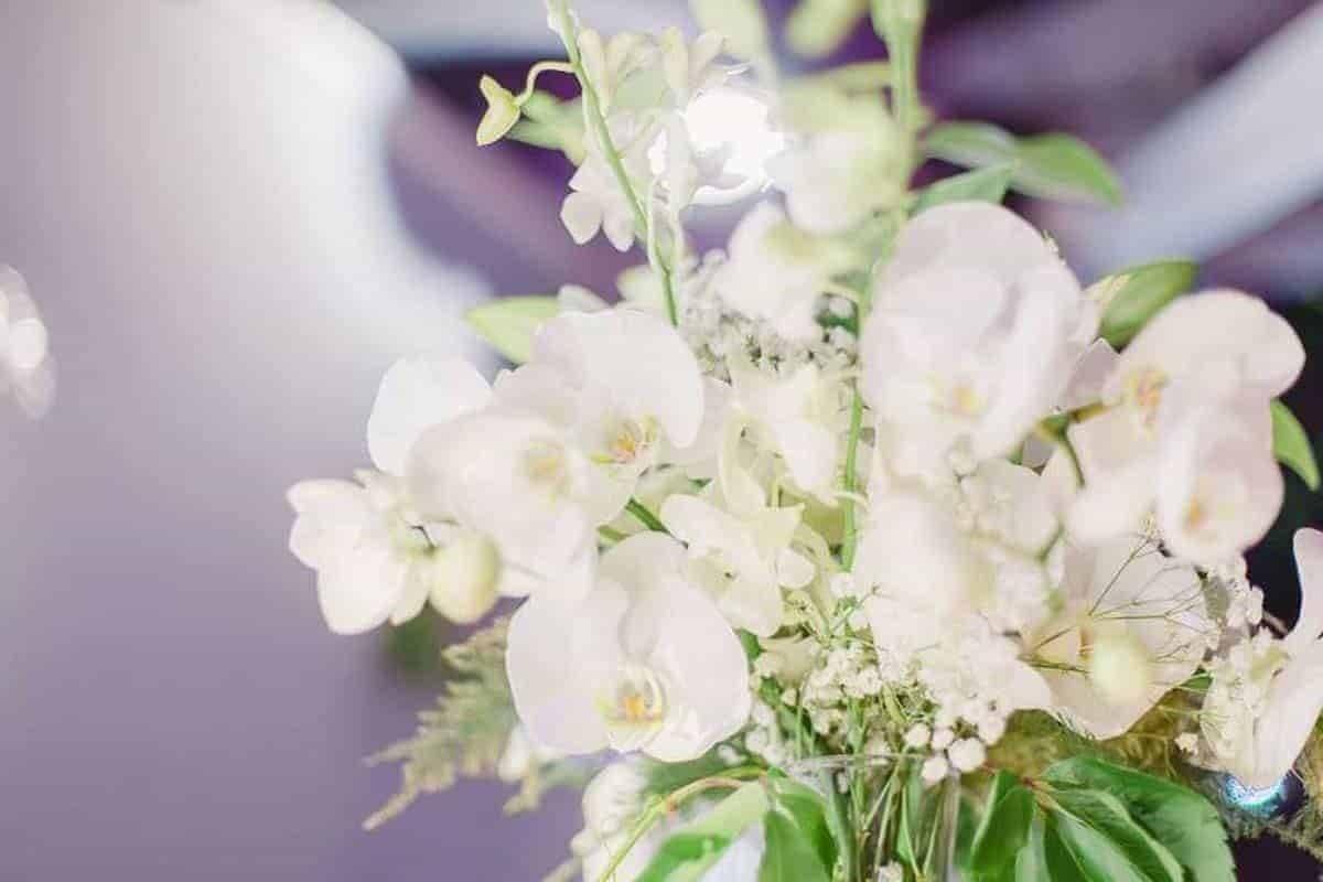 14793966 10210647591245024 1519202161 n - Luxury Wedding Gallery