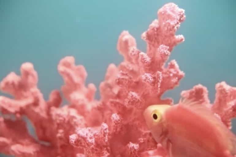 Pantone Colour of the Year: Living Coral