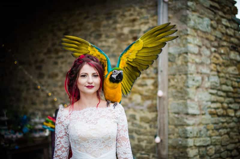 Pet pals: Animals at weddings