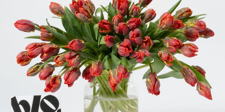 Fabulous Flowers