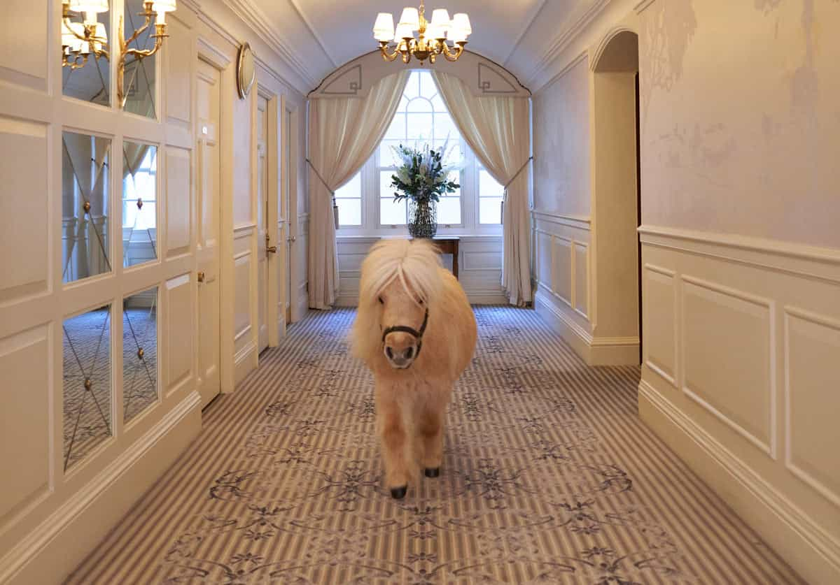 Teddy at The Goring